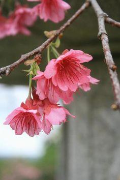 '12.02.02 Nago-Gusuku , Okinawa