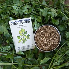 All Good Things Organic Seeds Cilantro Seeds 225 Certified Organic NonGMO Heirloom Open Pollinated Seeds from the United States *** Want additional info? Click on the image.