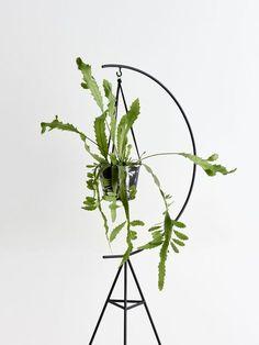 Relookez vos plantes |MilK decoration