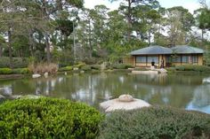 The Japanese Garden at Hermann Park is a quiet place to think. Visit Houston, Houston Tx, Houston Attractions, Stuff To Do, Things To Do, Houston Livestock Show, Hermann Park, Showing Livestock, Water Element