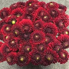 Dahlias Red Fox are a show-stopping red cut flower. tall and wholesaled in 20 stem wraps. Flowers Uk, Plastic Flowers, Rustic Wedding Flowers, Bridal Flowers, Rustic Weddings, Florist Supplies, Flowers Delivered, Flower Food, Gothic Wedding