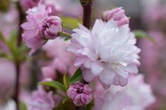 Pink Garden Flowers Image 19 by CreativeArtImages on Etsy