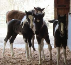 Check out this website. Last Chance Corral. Horse Rescue...the foals are in