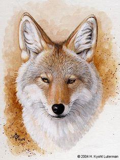 Coyote Portrait by kyoht on DeviantArt