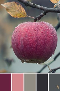 ZJ Colour Palette 152 #colourpalette #colourinspiration