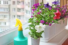 ***5 Plantas Ideales para el Verano*** ¡Adiós al frío y al encierro!. Recupera la alegría en tu hogar y tus balcones con estas plantas ideales para el verano muy fáciles de mantener....SIGUE LEYENDO EN.... http://comohacerpara.com/5-plantas-ideales-para-el-verano_11470h.html