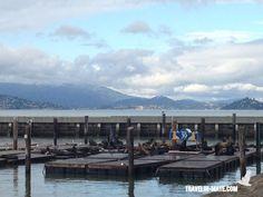 Sea lions @ Pier 39/Fisherman's Wharf