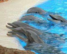 """Lav: tutti in piazza per dire basta ai """"delfini-clown"""""""