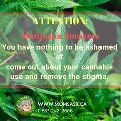 This 2019, It's time to remove the stigma on weed use. Visit our online shop www.momsask.ca #newyearresolution #happynewyear #newyear2019 #weedislife #weedismedicine #marijuanaonline #marijuanasask #cannabissaskatchewan #buyweedonline #weeddelivery #weed #saskatchewan #saskatoon #regina #princealbert #moosejaw #swiftcurrent #yorkton #northbattleford #lloydminster #estevanwarman Buy Weed Online, Happy New Year, Cannabis, How To Remove, Mom, Ganja, Happy New Year Wishes, Mothers