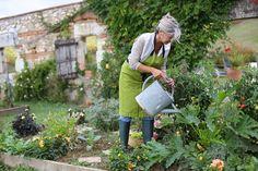 Mohutné cukety mohou nasadit mnoho plodů, zálivka je podpoří Permaculture, Gardening For Beginners, Gardening Tips, Companion Planting Guide, Flower Pot Design, Backyard Vegetable Gardens, Starting A Garden, Garden Pests, Easy Garden