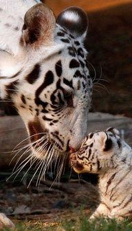 snow leopard & baby