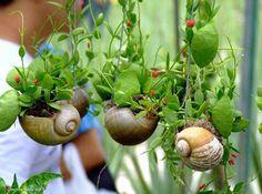 DIY Mini Gardens That Grow Inside Your Favorite Seashells