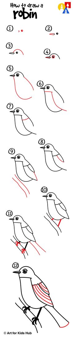 How to draw a robin bird!