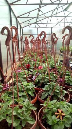 (47) Одноклассники Album, Plants, Flora, Plant