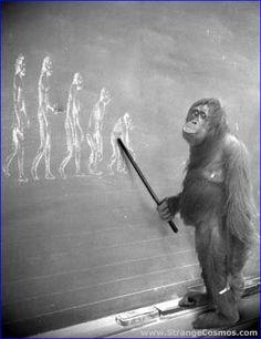 Leccion de evolucion