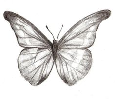 Auf diese Seite erkennen Sie, wie kann man selber ganz schnell einen Schmetterli… On this page, you can see how quickly you can easily draw a butterfly yourself. The instructions are included, have a look. Animal Drawings, Pencil Drawings, Easy Butterfly Drawing, Coloring Pages For Kids, Pencil Art, Disney Art, Easy Drawings, Easy Charcoal Drawings, Drawing Sketches