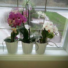 3ta gole orkidehe besyar ghashang ke khili dosteshoon daram & Khodeman azashoon movazebat mikonim taghdim mikonam be shoma My Orchids