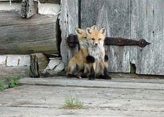 Don't be shy, little guy