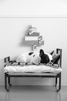 Perfect Bed For A Little Prince. Handsome French Bulldog.
