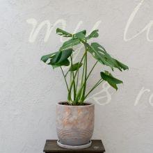the Farm Universal - 人気の観葉植物・多肉植物の通販は花と緑と雑貨のお店 Ricochet Petit