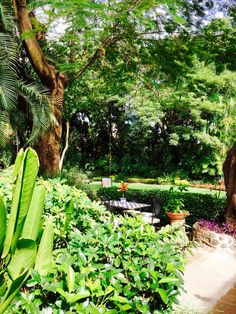 Morelos Plants, World, Plant, Planets