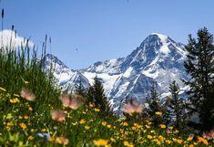 Sur le Mountain View Trail on a une vue incroyable sur le Eiger et le Mönch ❤️ ⠀⠀⠀⠀⠀⠀⠀⠀⠀⠀⠀⠀⠀⠀⠀⠀⠀⠀⠀⠀⠀⠀⠀⠀⠀⠀⠀⠀⠀⠀⠀⠀⠀⠀⠀⠀⠀⠀⠀⠀⠀⠀⠀⠀⠀⠀⠀⠀ ⠀⠀⠀⠀⠀⠀⠀⠀⠀⠀⠀⠀⠀⠀⠀⠀⠀⠀⠀⠀⠀⠀⠀⠀⠀⠀⠀⠀⠀⠀⠀⠀⠀⠀⠀⠀⠀⠀⠀⠀⠀⠀⠀⠀⠀⠀⠀⠀ 📸:@myswisspeaks ⠀⠀⠀⠀⠀⠀⠀⠀⠀⠀⠀⠀⠀⠀⠀⠀⠀⠀⠀⠀⠀⠀⠀⠀⠀⠀⠀⠀⠀⠀⠀⠀⠀⠀⠀⠀⠀⠀⠀⠀⠀⠀⠀⠀⠀⠀⠀⠀ ⠀⠀⠀⠀⠀⠀⠀⠀⠀⠀⠀⠀⠀⠀⠀⠀⠀⠀⠀⠀⠀⠀⠀⠀⠀⠀⠀⠀⠀⠀⠀⠀⠀⠀⠀⠀⠀⠀⠀⠀⠀⠀⠀⠀⠀⠀⠀⠀ ⠀⠀⠀⠀⠀⠀⠀⠀⠀⠀⠀⠀⠀⠀⠀⠀⠀⠀⠀⠀⠀⠀⠀⠀⠀⠀⠀⠀⠀⠀⠀⠀⠀⠀⠀⠀⠀⠀⠀⠀⠀⠀⠀⠀⠀⠀⠀⠀ ⠀⠀⠀⠀⠀⠀⠀⠀⠀⠀⠀⠀⠀⠀⠀⠀⠀⠀⠀⠀⠀⠀⠀⠀⠀⠀⠀⠀⠀⠀⠀⠀⠀⠀⠀⠀⠀⠀⠀⠀⠀⠀⠀⠀⠀⠀⠀⠀ ⠀⠀⠀⠀⠀⠀⠀⠀⠀⠀⠀⠀⠀⠀⠀⠀⠀⠀⠀⠀⠀⠀⠀⠀⠀⠀⠀⠀⠀⠀⠀⠀⠀⠀⠀⠀⠀⠀⠀⠀⠀⠀⠀⠀⠀⠀⠀⠀ #suisse #switzerland #schweiz #svizzera… Mountain View, Mount Rainier, Switzerland, Trail, Mountains, Nature, Places, Naturaleza, Nature Illustration