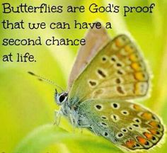 Butterflies are God's proof that we can have a second chance at life.