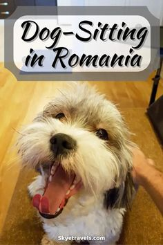 I love dogs. When I heard that my friend from Timisoara started her own business dog-sitting in Romania, I had to ask if there was any chance I could help. #HouseSitting #Dogsitting #Bucharest #Romania #Puppies Bucket List Destinations, Travel Destinations, Budget Travel, Travel Tips, Bucharest Romania, Central Europe, Ultimate Travel, I Love Dogs, Trips