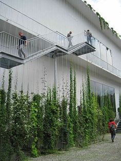 Stunning Vertical Garden Ideas To Make Your Home Fresh And Cool Once you've designed your garden, pick the plants that you want to grow during each season. There's no better solution than to bring a vertical garden. While arranging a vertical garden… Green Architecture, Landscape Architecture, Landscape Design, Vertical Garden Design, Vertical Gardens, Vertical Green Wall, Vertical Planting, Garden Ideas To Make, Wire Trellis