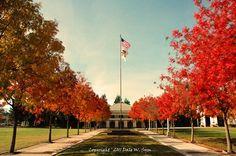 Fall in Lodi, California