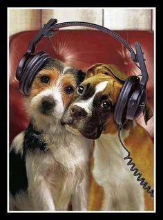 Jammin' pups
