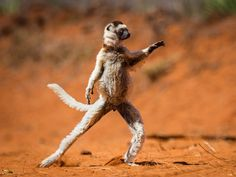 Comedy Wildlife Photography Awards Finalists