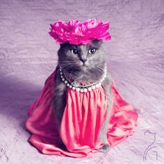 Hello, my name is Pitzush, Puss In Glam, and I pretty much think that you won't find a more stylish cat than me. I was found when I was little, half dead, starving and very ill. My sweet human saved me and from that point my life has completely changed.