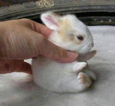 Sevimli hayvanlar - cute animals