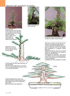 Clic aqui para aumentar tamaño de la imagen Terrarium Plants, Bonsai Plants, Bonsai Garden, Flora Garden, Garden Art, Container Plants, Container Gardening, Bonsai Pruning, Prunus Mume