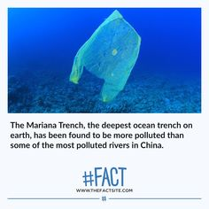 Wtf Fun Facts, Random Facts, Funny Facts, Weird World Facts, Mariana Trench, Save Our Earth, Michael Crichton, Daily Facts, Unbelievable Facts