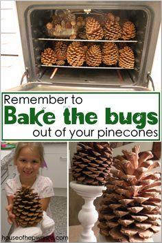 Bake the bugs out of your pinecones! - House of Hepworths