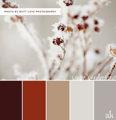 a winter-inspired color palette // brown, tan, gray, white // photo by Mutt Love Photography