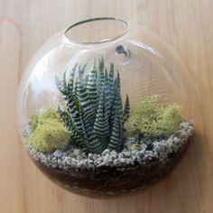 Wall bubble succulent kit