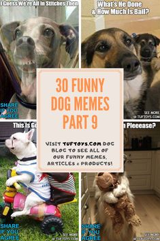 View Fun New Photos Of Delightful Doggies Like Collies, Spaniels & Poodles & Find Out What They're Really Thinking With Our Hi-Tech Thought Reading Equipment, Only @ TufToys.com :) Funny Dog Memes, Funny Dogs, Funny Animals, Funny Share, Durable Dog Toys, Spaniels, Poodles, Dog Supplies, Four Legged