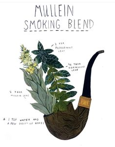 How To Craft Your Own Herbal Smoking Blends Herbal Academy Learn how to create your own herbal smoking blends that are enjoyable and can benefit your health at times Home Remedies For Uti, Natural Health Remedies, Herbal Remedies, Acne Remedies, Healing Herbs, Medicinal Plants, Natural Healing, Herbal Plants, Ayurvedic Herbs