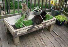 table de jardin de palettes en bois pour les chats