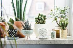 6 ideas para decorar tu casa con cactus que te van a encantar - IMujer