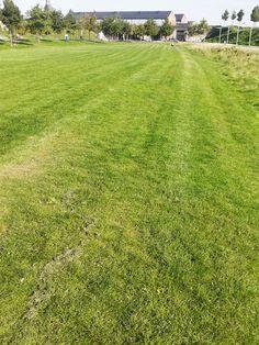 LIJN = De grasmaaier zorgt voor lijnen op het gras. Negatieve, dikke, gebogen, variabele, lange, +/- parallell, wazige lijn