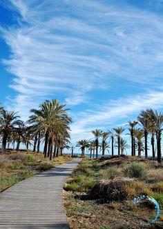 Playa de dunas - paseo entre palmeras al borde del mar