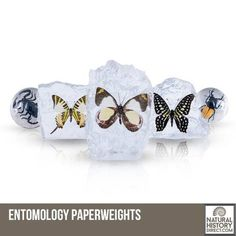 Paperweights - Shop the collection, website updated daily, click here now www.NaturalHistoryDirect.com