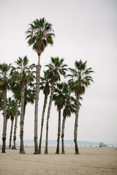 Palm Trees (picture by Eat Sleep Wear)