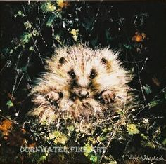 david shepherd baby hedgehog print