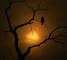 A Kind of Hush by Eileen Sabes on Capture Minnesota // It was nice sharing the sunset with an eagle