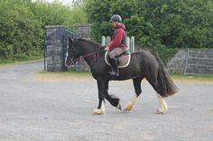 Riding All That Jazz. https://www.youtube.com/watch?v=svTWp3ErE5M #loveirishhorses #horseforsale